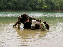 Elephant Bath And Ride Kovalam Day Tour