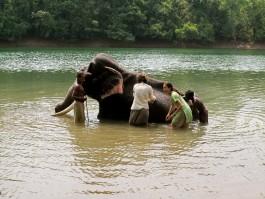 Elephant Bath And Ride Kovalam Day Tour
