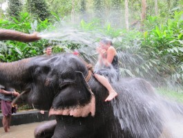 Elephant Shower Ride Kovalam Day Tour