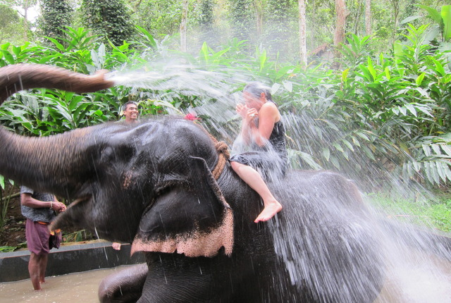 Elephant Shower Ride Kovalam Day Tour