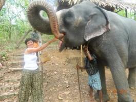 Elephant Ride And Bath Tour Kovalam