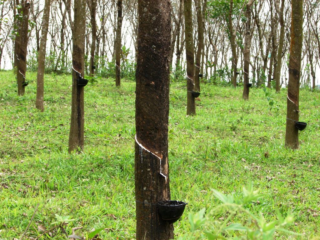 Trivandrum to ponmudi tour rubber plantations