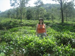 Varkala to tea plantations