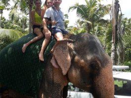 elephant safari trivandrum