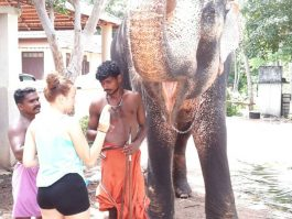 elephant kerala 2017