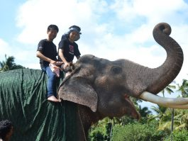 ELEPHANT RIDE KOVALAM BEACH