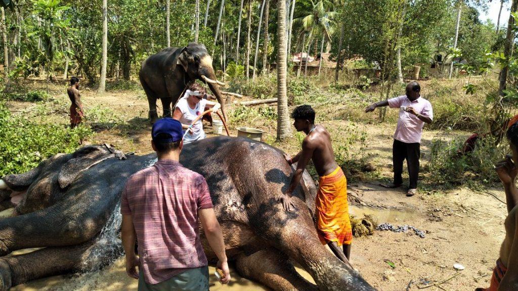 elephant ride and bath tour trivandrum