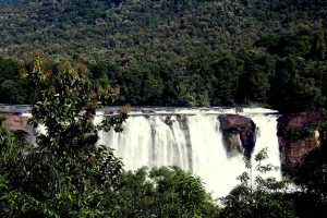 Cochin Day Trip-Athirappilly Waterfall Tour