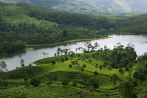 Day Trip to Munnar from Kochi
