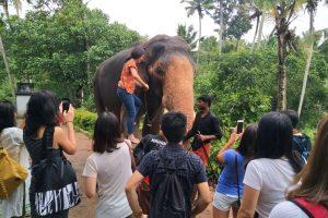 Trivandrum elephant ride tour