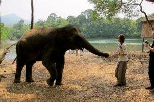 elephant tour from trivandrum