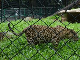 zoo trivandrum