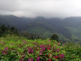 Day Tours Kovalam Ponmudi Hillstation