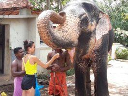 elephant trivandrum